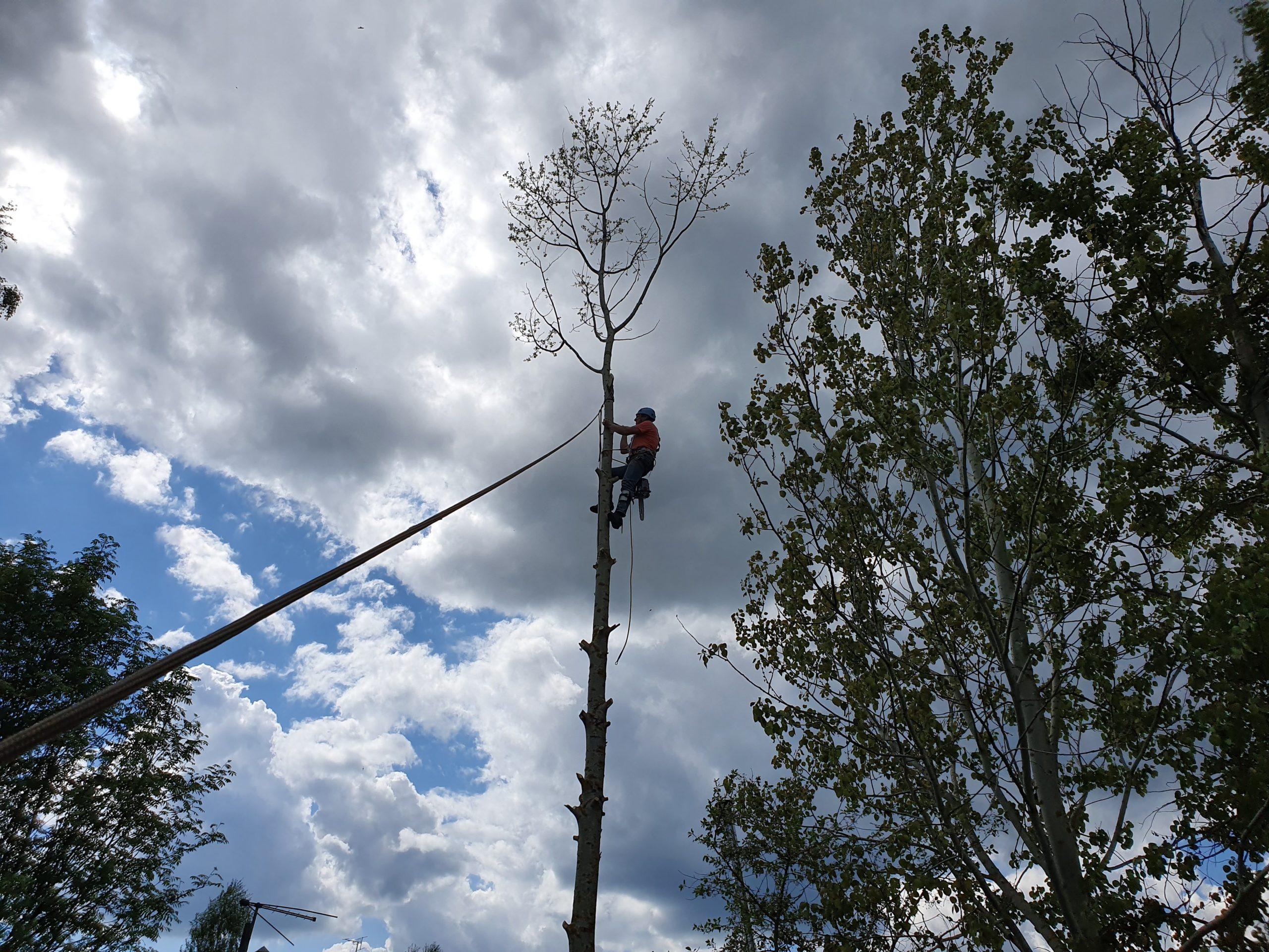 вырубают деревья картинки для регулирования движения