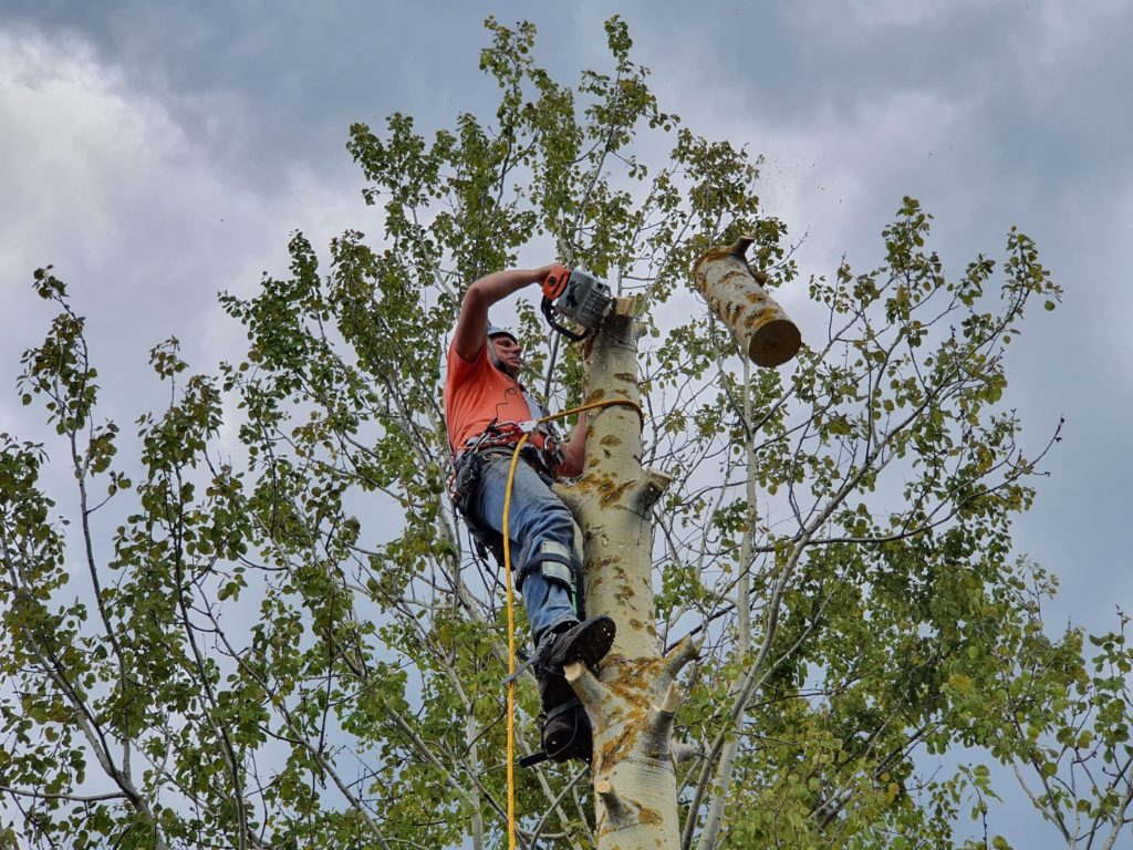 Спилить дерево частями