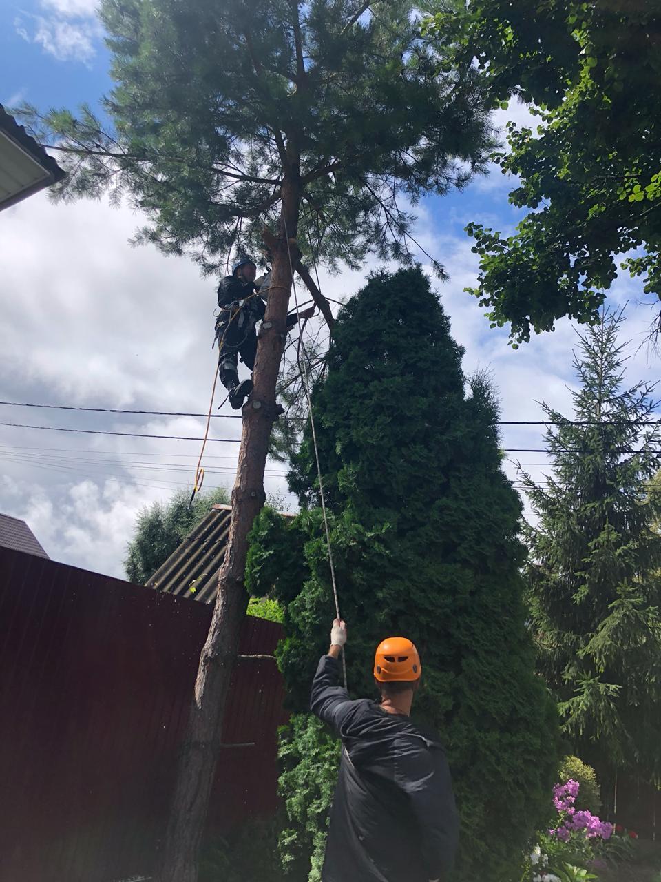 группы вырубают деревья картинки кого есть отрядные
