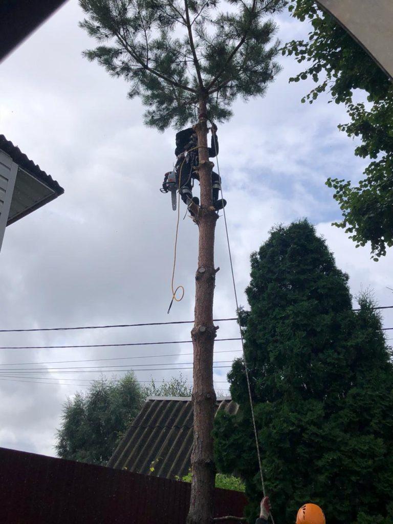 Удаление дерева по частям